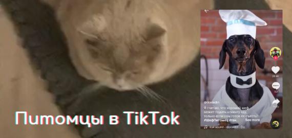 Питомцы в TikTok